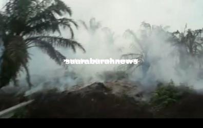 pt-adei-plantation-sumbang-kabut-asap-diduga-lahan-ini-sengaja-dibakar