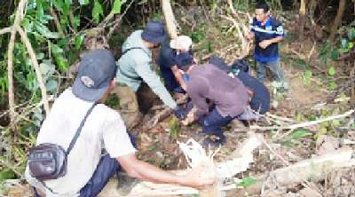 Beruang Masuk Perangkap, BBKSDA Riau Ingatkan Pemegang Konsesi Bersihkan Lahan dari Jerat