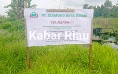 """Bermodalkan Logo Uni Seraya Group, PT Diamond Raya Timber Babat Hutan Pakai IUPHHK-HA Diduga """"Bodong"""""""
