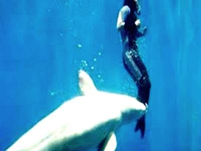 dikejarkejar-ikan-hiu-penyelam-diselamattkan-paus
